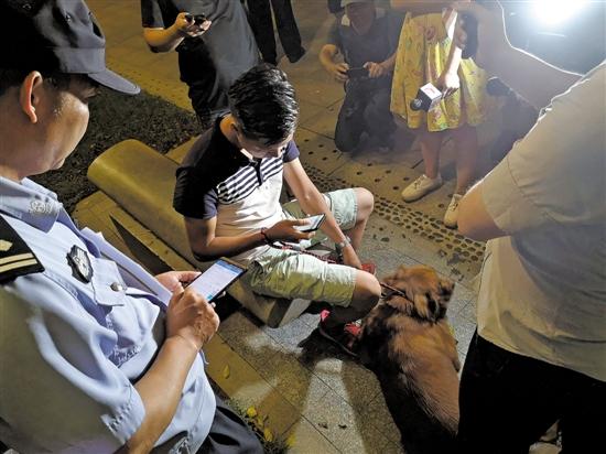 广州整治养犬行动持续至年底